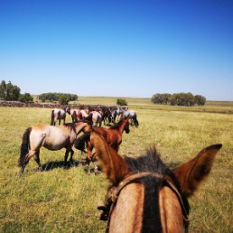 yacana-paris-horses-chevaux-uruguay