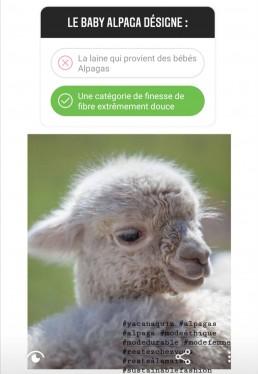 Quiz yacana baby alpaga