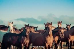 yacana cheval criollo sud du brésil fagner almeida