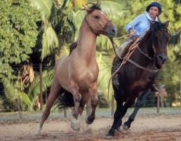 yacana mulheres na doma article journal l'équitation et les femmes - chevaux criollos